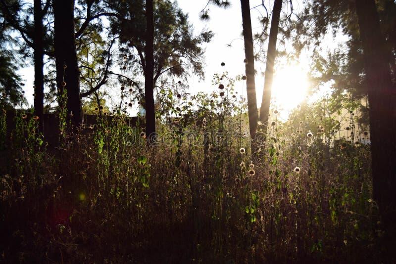 kvinnor för romantisk solnedgång för aftonmän väntande arkivfoton