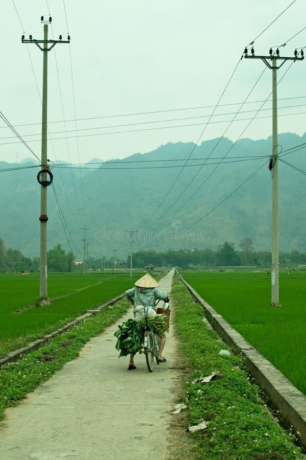 Kvinnor i traditionell vietnamesisk hatt på cykeln i grön risfält arkivfoton