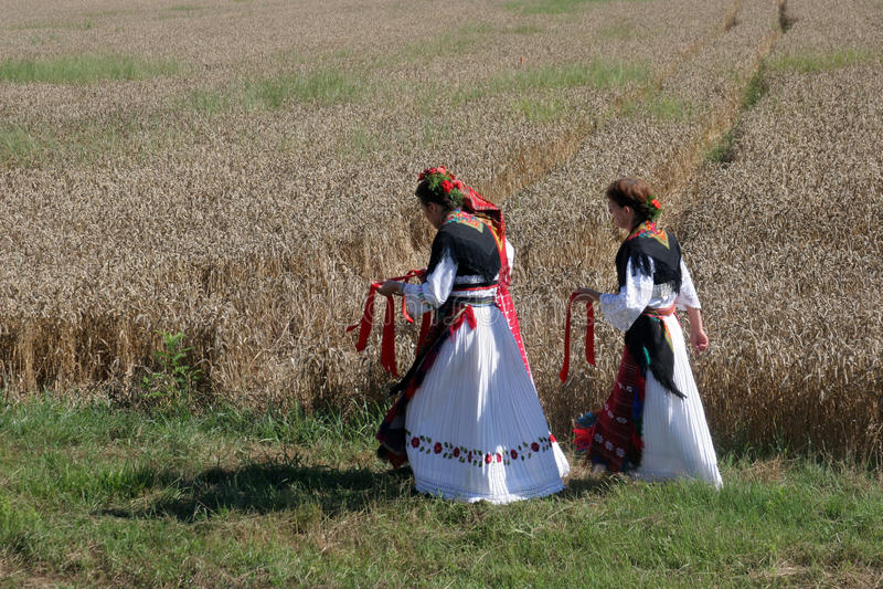 Kvinnor i traditionella dräkter går in i fältet att skörda vete royaltyfri foto