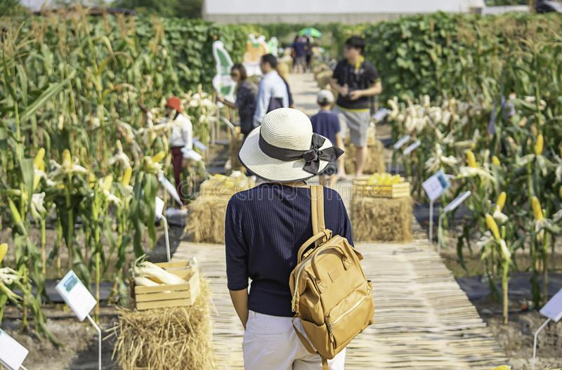 Kvinnor knuffar ryggsäcken och bär fält för en hattbakgrundshavre och oskarpa turister royaltyfria foton