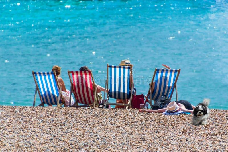 Kvinnor på semester med en hund är vila och solbada på soldagdrivarna mot bakgrunden av havet royaltyfri bild