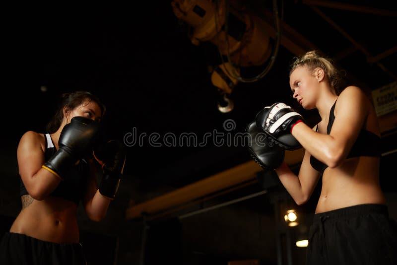Kvinnor som boxas låg vinkel fotografering för bildbyråer