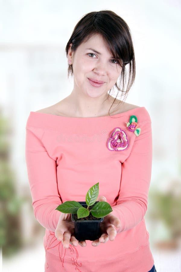 Kvinnor som erbjuder ett ungt träd arkivfoto