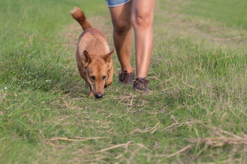 Kvinnor som joggar med hunden arkivbilder