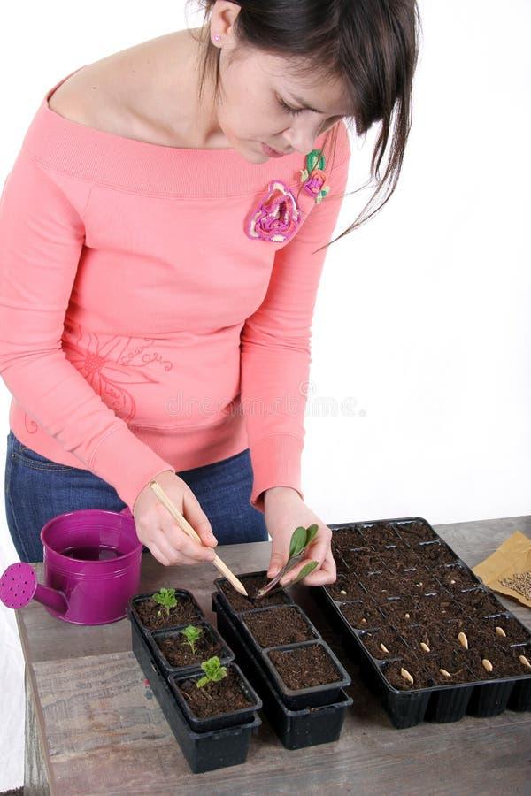 Kvinnor som planterar en ung prästkrageväxt arkivfoton