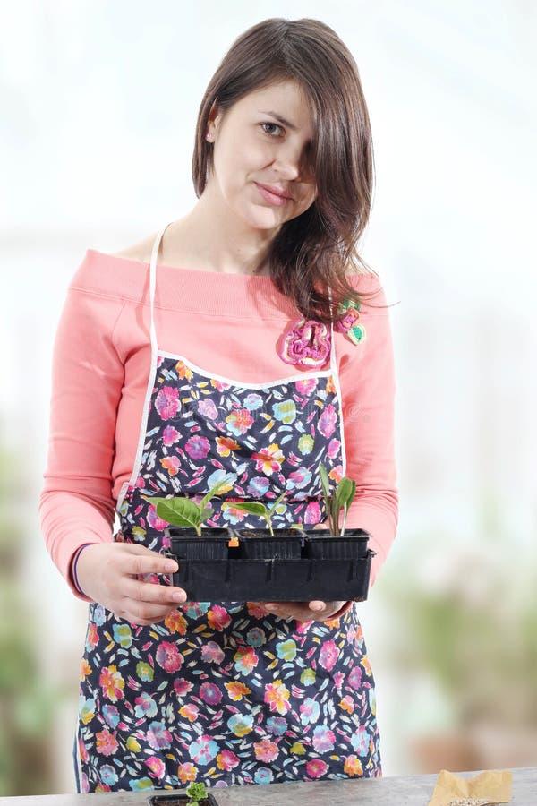Kvinnor som rymmer krukor med små växter fotografering för bildbyråer