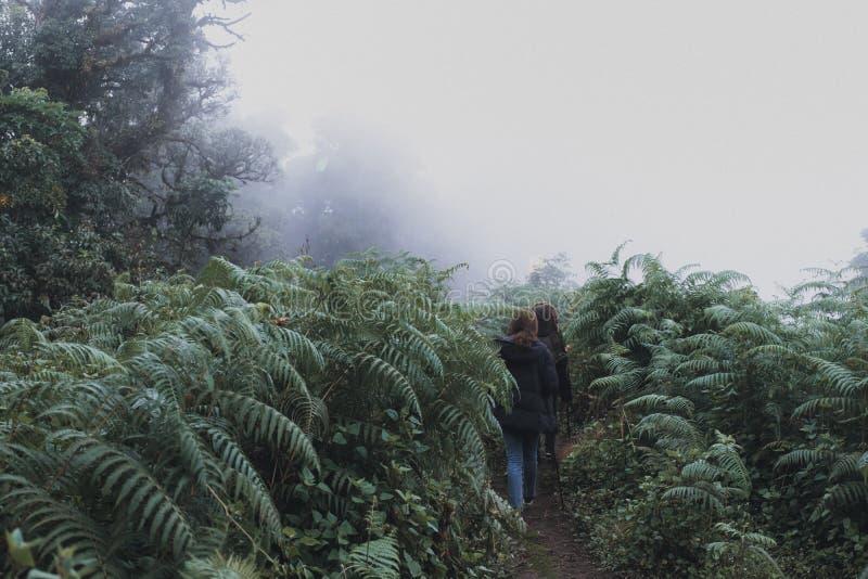 Kvinnor som trekking i djungeln av regnskogträn arkivbild