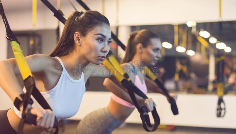 Kvinnor som utbildar triceps med trxkonditionremmar arkivbild