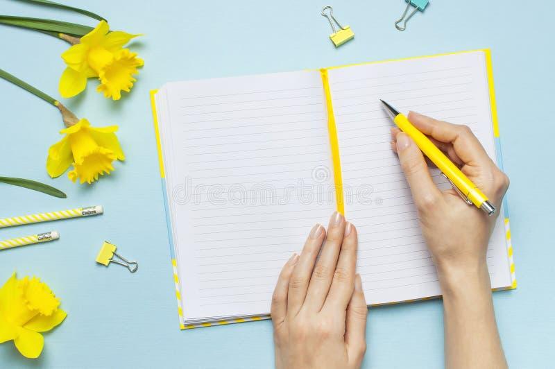 Kvinnors händer, öppen tom anteckningsbok, penna, gem, pingstlilja för vårblommapåskliljor på blå bakgrund Kvinnligt skrivbord, k arkivfoton