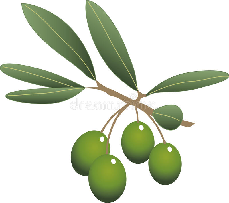 Kvist av oliv stock illustrationer