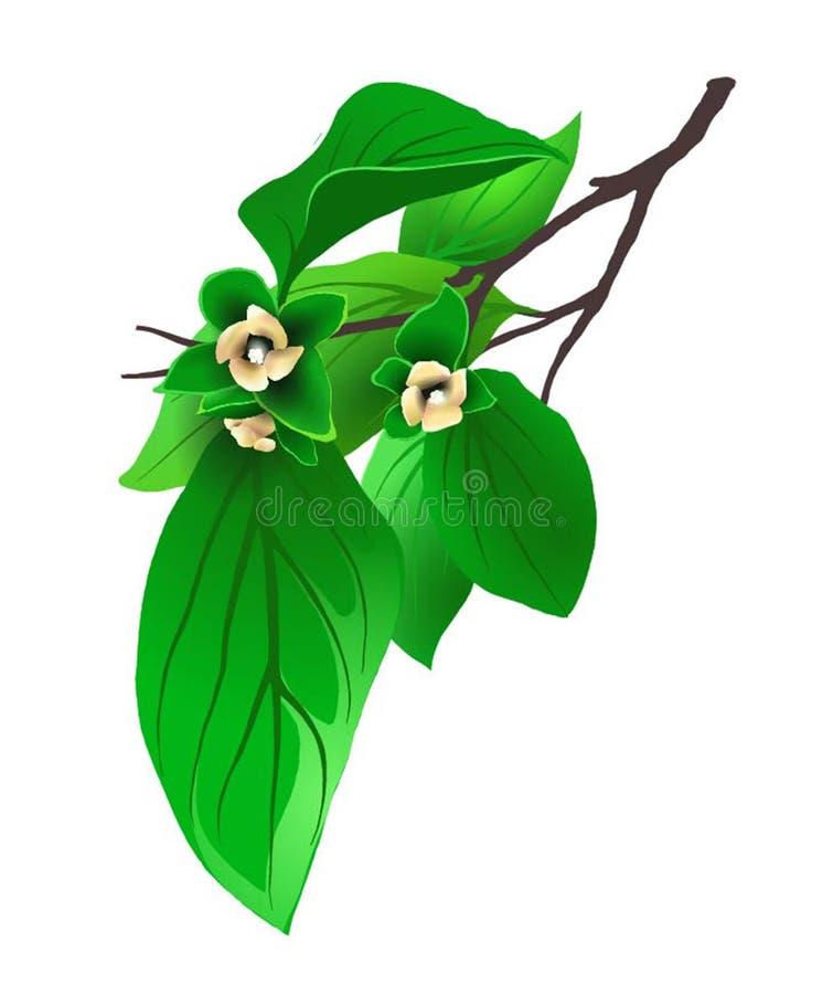 Kvist av persimonet med lite blommor royaltyfri fotografi