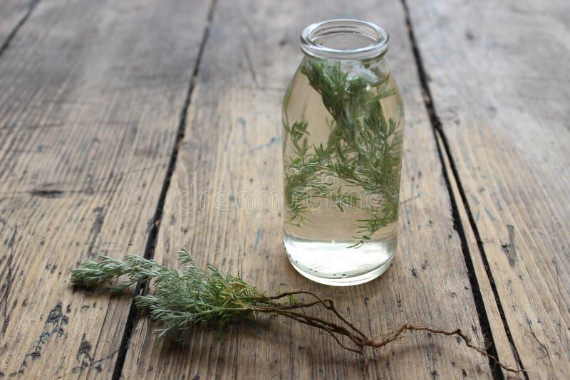 Kvistväxt i en glasflaska fotografering för bildbyråer