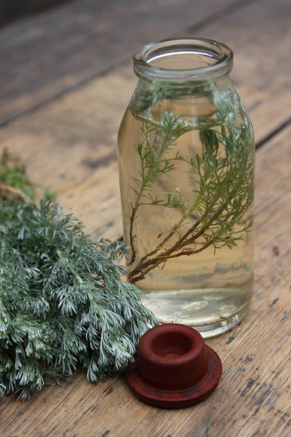 Kvistväxt i en glasflaska arkivfoto