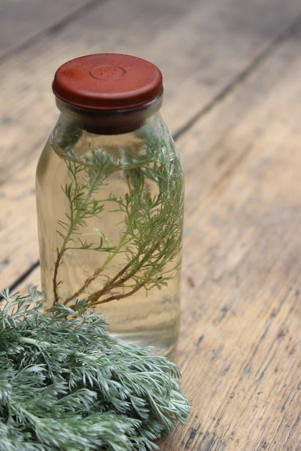 Kvistväxt i en glasflaska royaltyfri bild