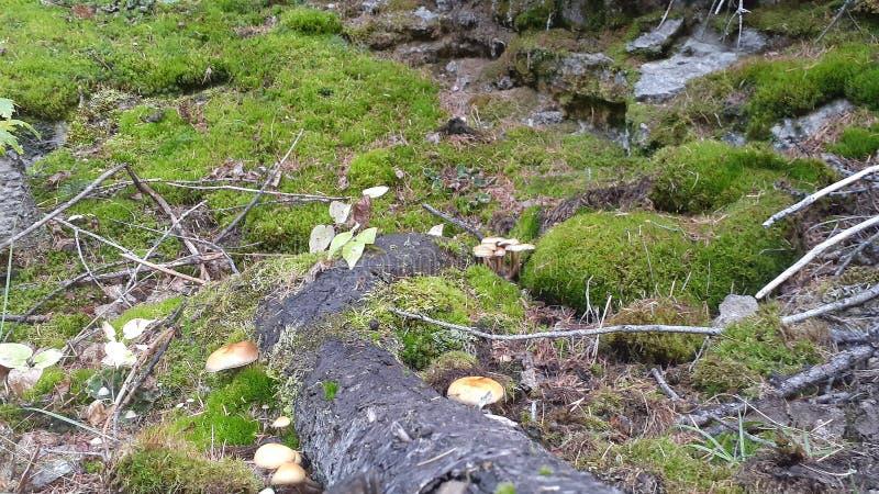 Kvr railways mushroom. Motherearth, growth stock images