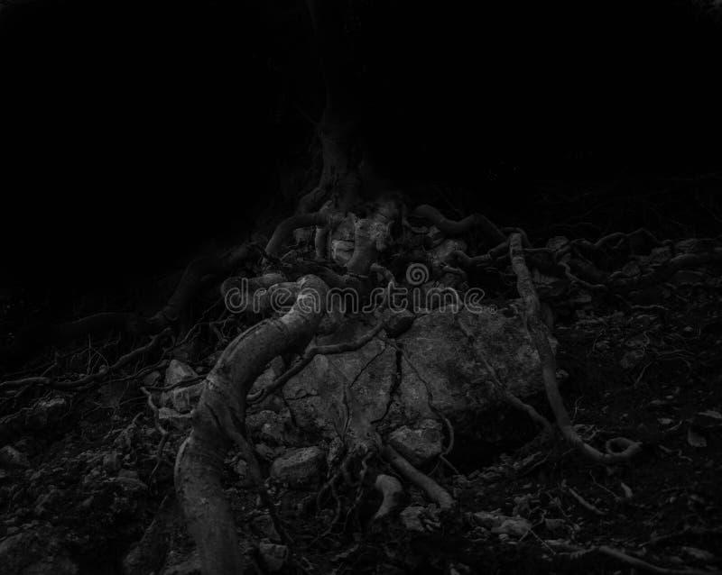Kwade boomwortels in een donker bos stock afbeelding