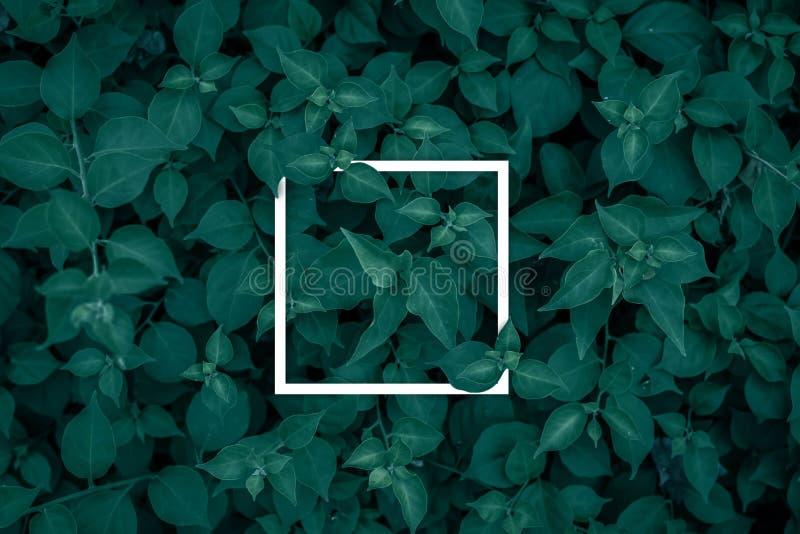 Kwadratowa rama, puste miejsce dla reklamowej karty lub zaproszenie, zdjęcie stock