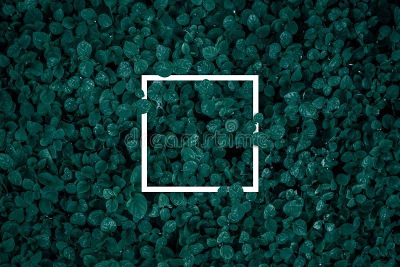 Kwadratowa rama, puste miejsce dla reklamowej karty lub zaproszenie, zdjęcia stock