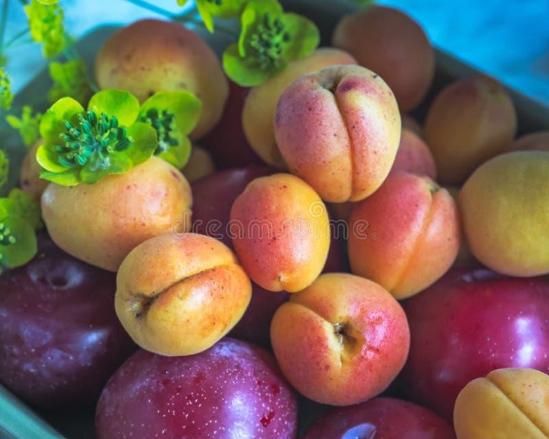 Kwadratowy ceramiczny talerz z świeżą owoc, czerwonymi śliwkami i nektarynami, strzał w górę jaskrawego stołu dalej, mała gałąź ł fotografia stock