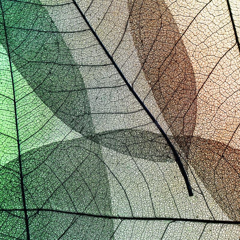 Kwadratowy delikatny piękny naturalny tło kolorowy transpare zdjęcia royalty free