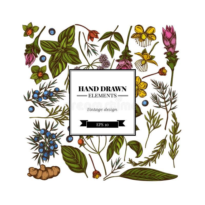 Kwadratowy kwiecisty projekt z barwionym arcydzięglem, basil, jałowiec, hypericum, rozmaryn, turmeric royalty ilustracja