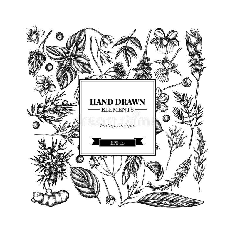 Kwadratowy kwiecisty projekt z czarny i biały arcydzięglem, basil, jałowiec, hypericum, rozmaryn, turmeric royalty ilustracja