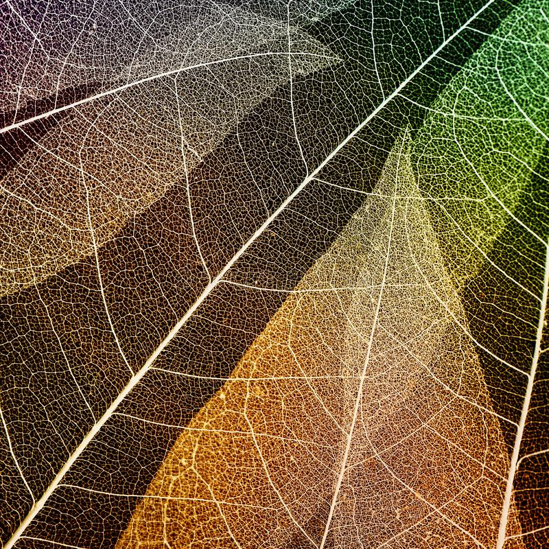 Kwadratowy naturalny tło kolorowi poluprecnik koścowie th zdjęcia stock