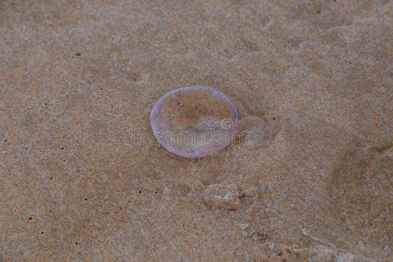 Kwallen op zand stock fotografie
