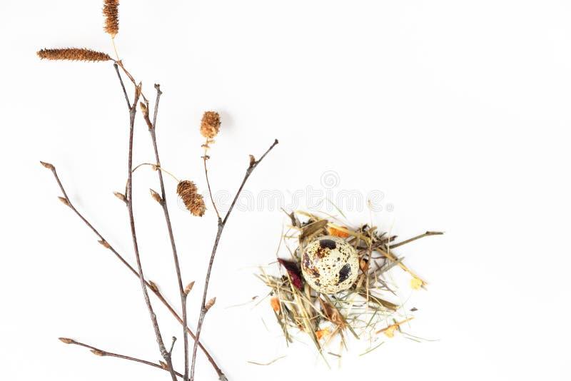 Kwartelsei in het nest stock foto's