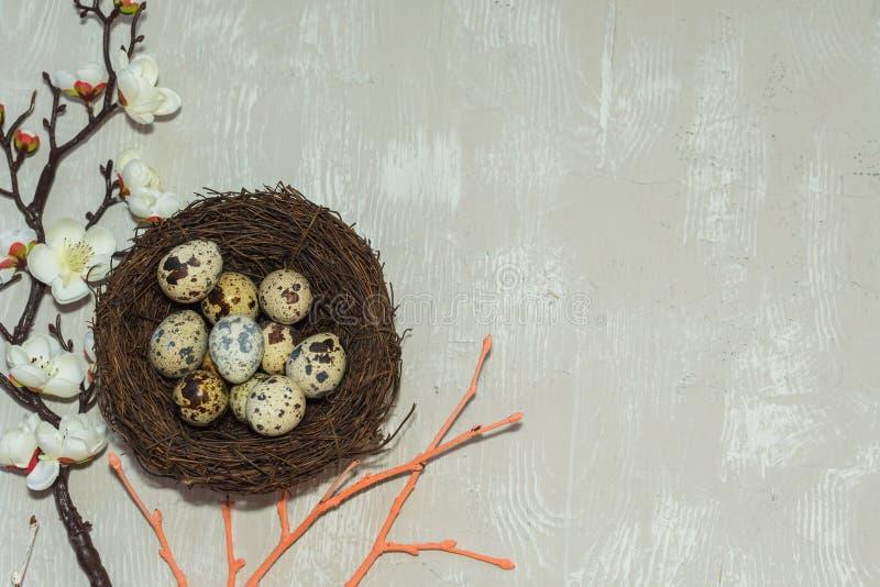 Kwartelseieren in het nest en een bloeiende tak De mening vanaf de bovenkant Gelukkige Pasen kaart royalty-vrije stock foto's