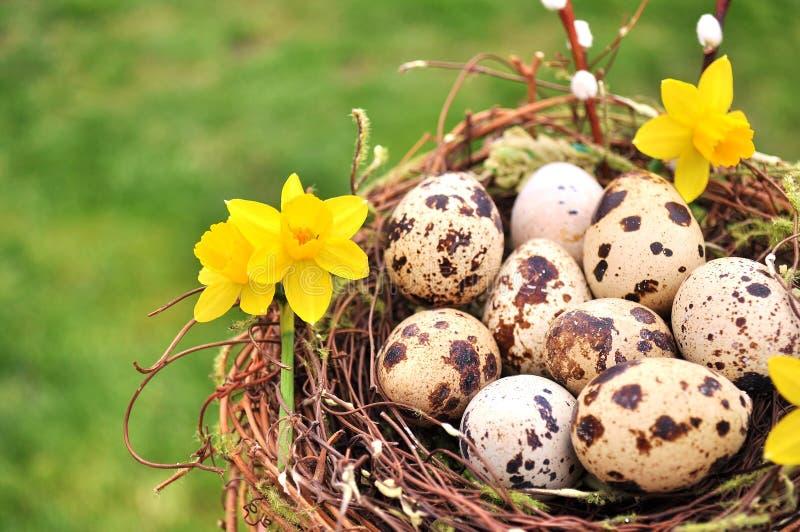 Kwartelseieren in nest met gele bloemen wordt verfraaid die De ruimte van het exemplaar stock afbeelding