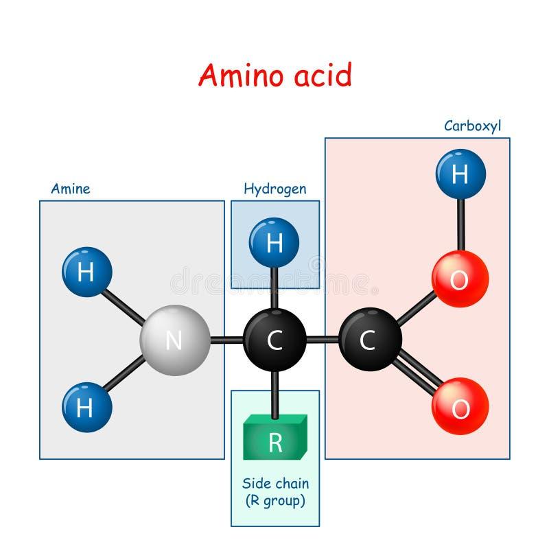 Kwas aminowy wzór strukturalny i model cząsteczki ilustracja wektor