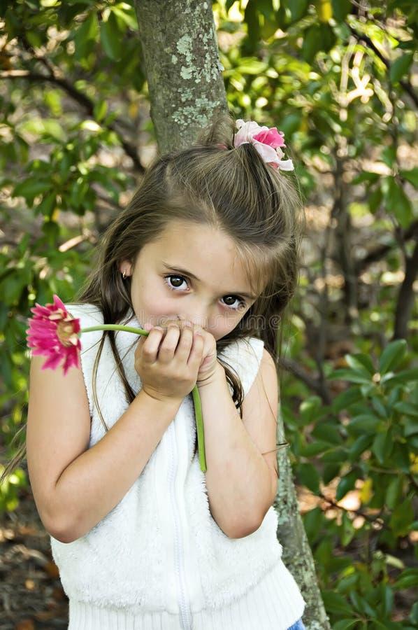 kwiaciarka nieśmiała obraz royalty free