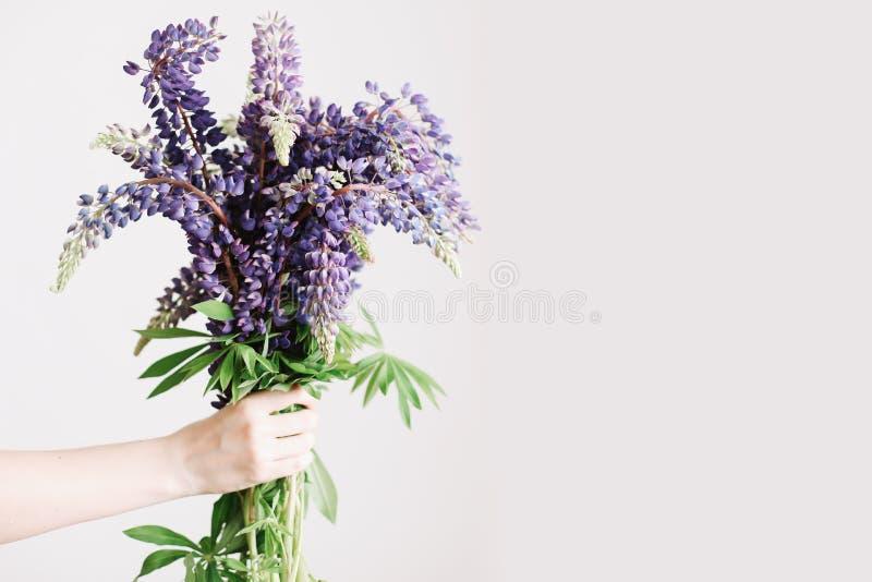 Kwiaciarni minimalny pojęcie Bukiet purpurowi łubiny w kobiet rękach na białym tle Kobieta chwyta lata wildflowers fotografia stock