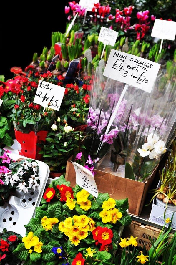 kwiaciarnia sklep zdjęcia royalty free