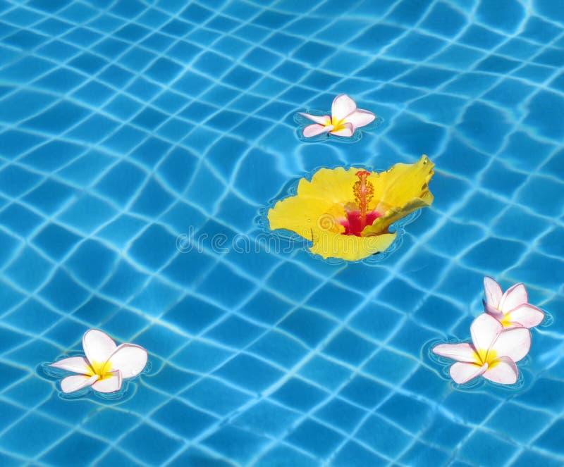 kwiatów basenu dopłynięcie zdjęcie royalty free
