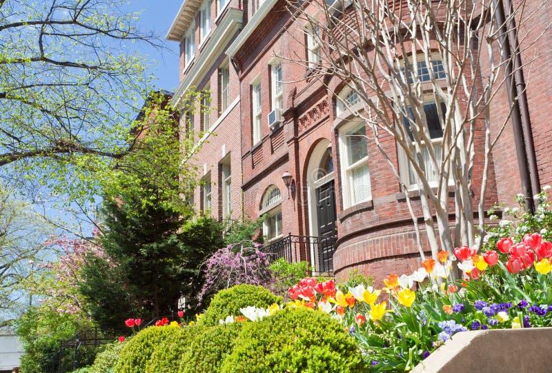 kwiatów domów richardsonian romańszczyzny rzędu wiosna fotografia royalty free