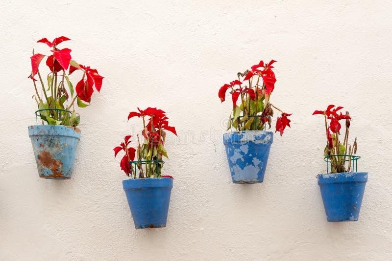 Kwiatów garnki obrazy stock