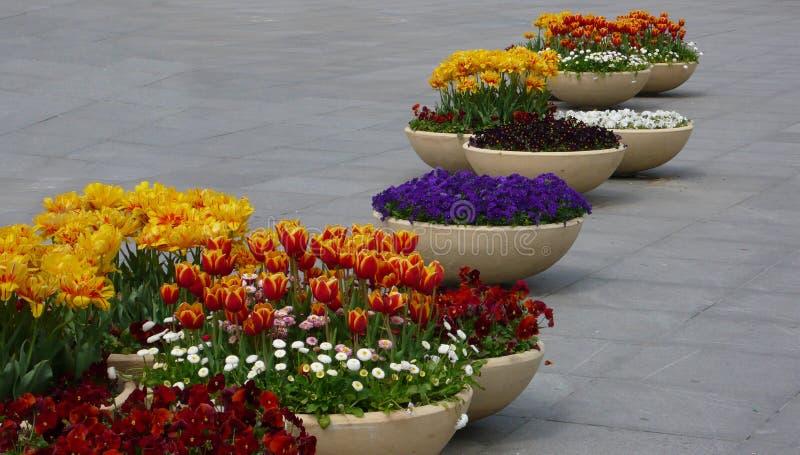 Kwiatów garnki na ulicie zdjęcie stock