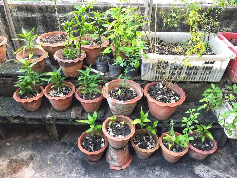 Kwiatów garnki z ziele i warzywami fotografia stock