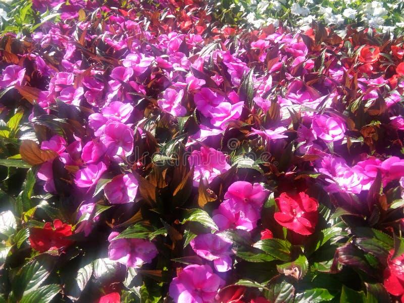 Kwiatów kwiaty obraz stock
