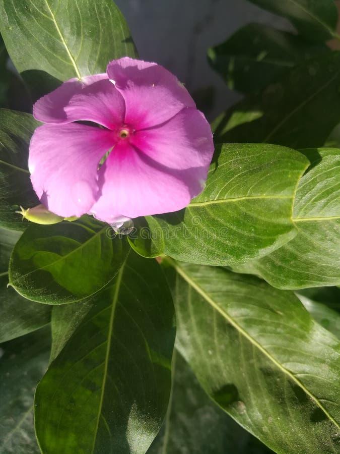 Kwiatów liści roślina fotografia stock