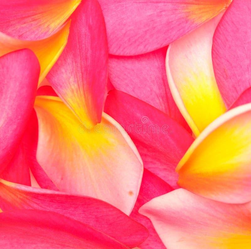 Kwiatów płatki fotografia stock