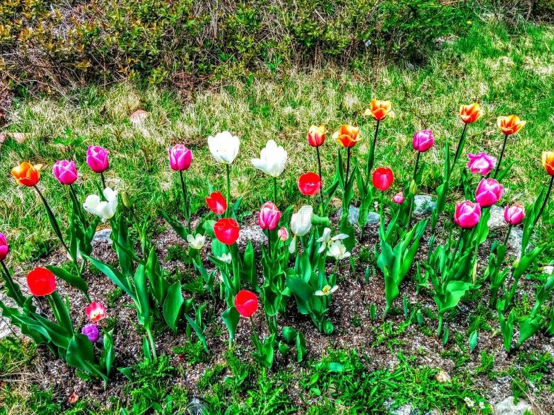 Kwiatów przygotowania fotografia royalty free