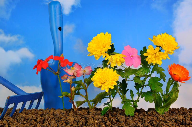 kwiatów target1445_1_ zdjęcia stock