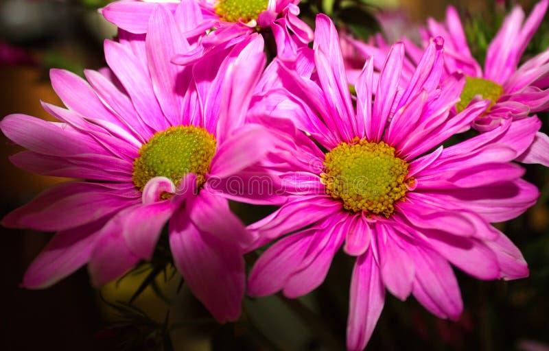 Kwiatów uśmiechy obraz stock
