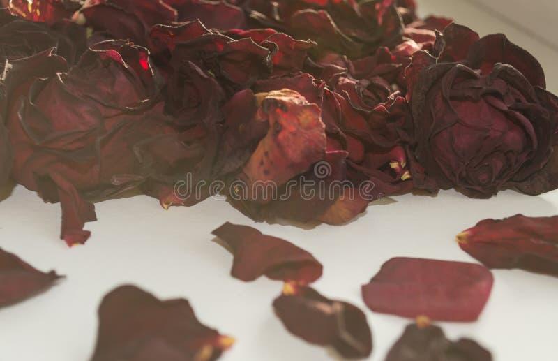 kwiatów wysuszeni płatki obraz royalty free