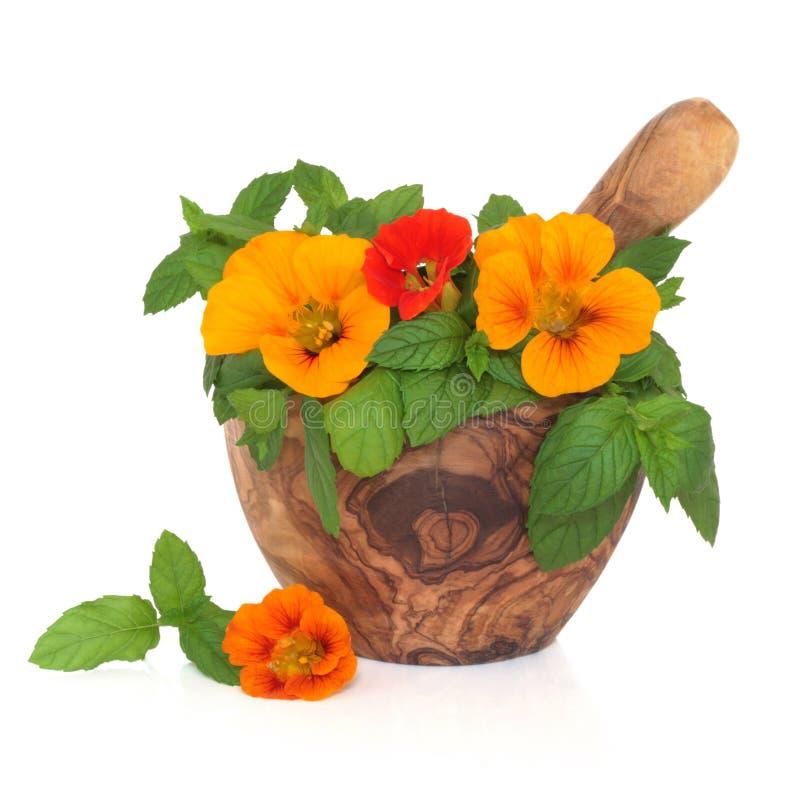 kwiatów ziele mennicy nasturcja fotografia stock