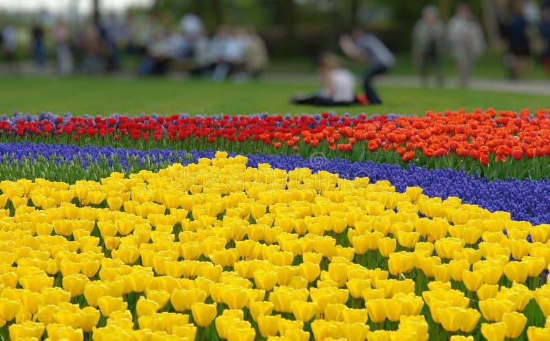 kwiat łóżkowa wiosna zdjęcia stock