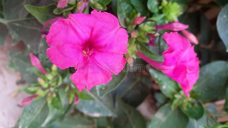 Kwiat łapał noc obraz stock